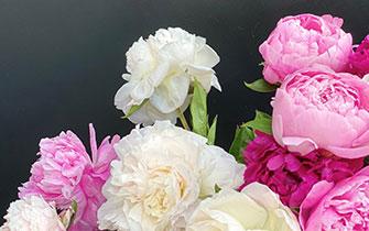 flowers-clearmems